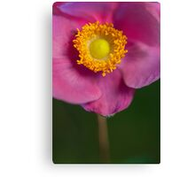 Yellow, pink and green Canvas Print