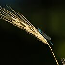 Grass with Blue Damsel by Thomas Young