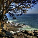 ogunquit maine by Monica M. Scanlan