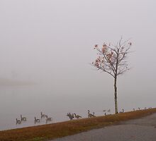 Fog At The Market Common by Dawne Dunton