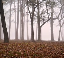 Fog At Dawn by Dawne Dunton