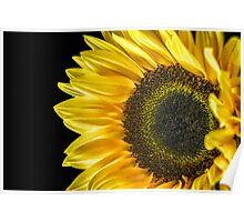 Sun Flower Macro  Poster