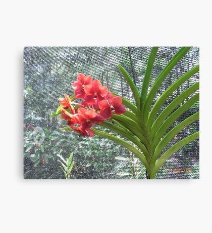 Red Orchid - Garden of the sleeping Giant, Fiji. Canvas Print