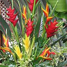 Bird of Paradise Flowers by kenspics