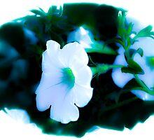 Summer Softness by Betty MacRae