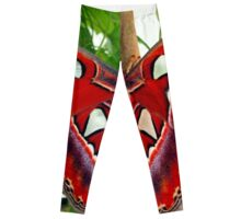 Red Giant Prometheus Moth Leggings