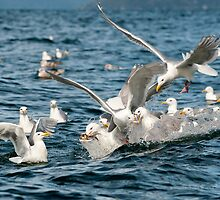Feeding Frenzy by TedRaynorPhotos