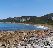 Beachfront, Rocky Cape National Park, Tasmania, Australia by Margaret  Hyde