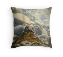 Underwater Rockscape, Green Frog (Rana clamitans) Throw Pillow