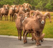 Counting Sheep by JamesA1