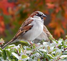SPARROW (2) by Sandra  Aguirre