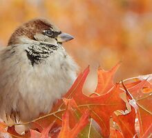SPARROW (4) by Sandra  Aguirre