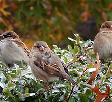 SPARROWS (1) by Sandra  Aguirre