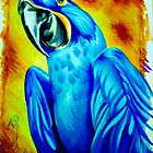 macaw cards. by resonanteye