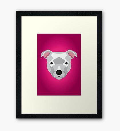 White Staffordshire Bull Terrier Framed Print