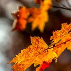 Fall colors by Bernd F. Laeschke