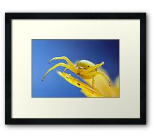 Yellow crab spider after rain Framed Print