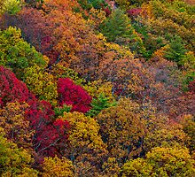 Fall colors in the Appalachian Mountains by Bernd F. Laeschke
