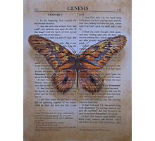 Genesis Butterfly Photographic Print