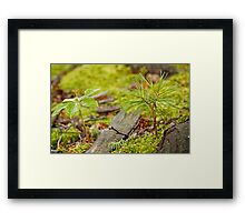 Tree Seedling Framed Print