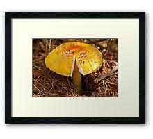 Sliced Mushroom Framed Print