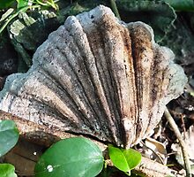 White Clam Offering - Ishigaki, Japan by amberfox17