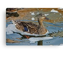 Mallard Duck and Reflections Canvas Print