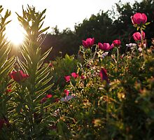 Flowers and The Sunset by Gary Horner