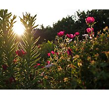 Flowers and The Sunset Photographic Print