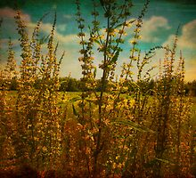 Golden Glory by Susan Werby
