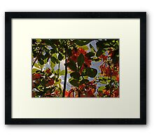 Under The Flower Shade Framed Print