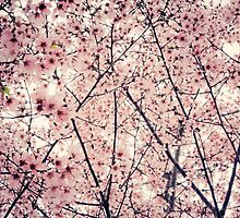 Blizzard of Blossoms by jenndalyn