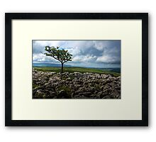 Conistone Tree Framed Print