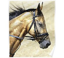 Akhal-Teke Horse Portrait Poster