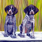 German Shorthaired Pointer Puppies by Oldetimemercan