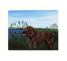 Irish Water Spaniel Dog Portrait Art Print