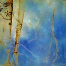 Romancing the Stars by Diane  Kramer