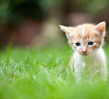 Sad kitty by Guy  Berresford