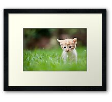 Sad kitty Framed Print