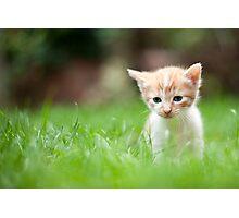 Sad kitty Photographic Print