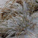 Grasses and Snow by WildestArt