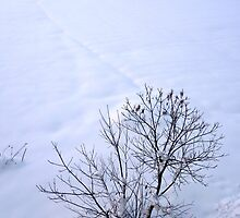 Chestnuts in winter by Marina Kropec