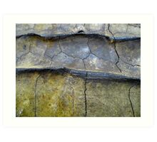 Alligator Snapping Turtle Shell Art Print