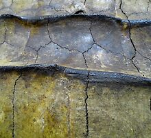 Alligator Snapping Turtle Shell by WildestArt