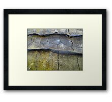 Alligator Snapping Turtle Shell Framed Print