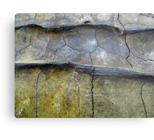 Alligator Snapping Turtle Shell Metal Print