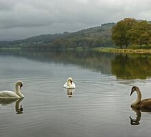 Esthwaite Swans by VoluntaryRanger