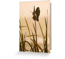 Red-winged Blackbird Silhouette Greeting Card