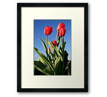 Red Tulips 2 Framed Print