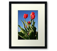 Red Tulips 2 Framed Print